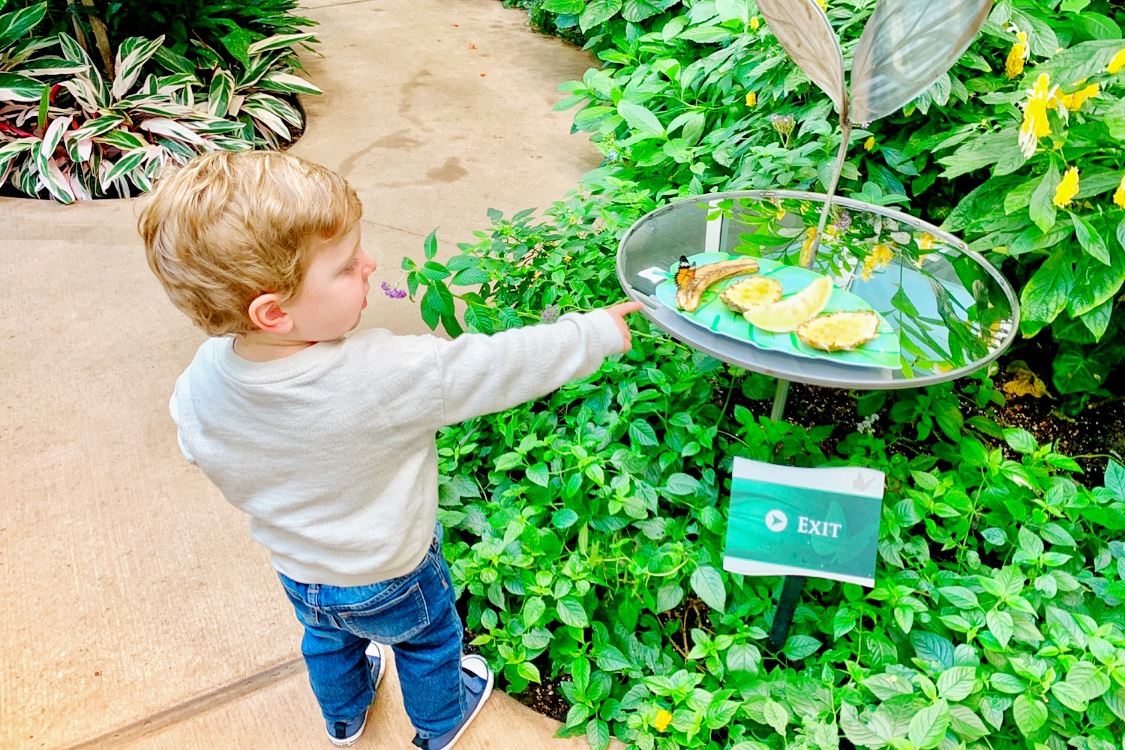 Hershey Gardens Butterly Atrium Hershey, PA with Kids Toddling Traveler