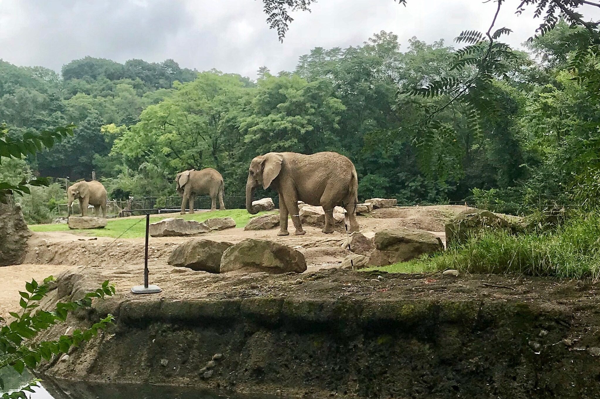 Things to do in Pittsburgh with Kids Pittsburgh Zoo Elephants